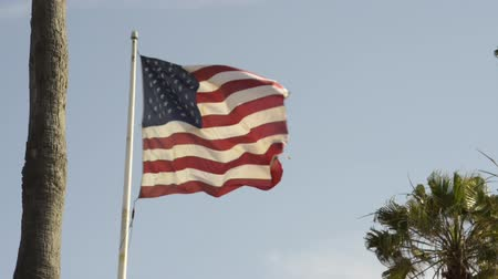 flaga : American flag waving in the wind with palm trees visible in the frame. Wideo