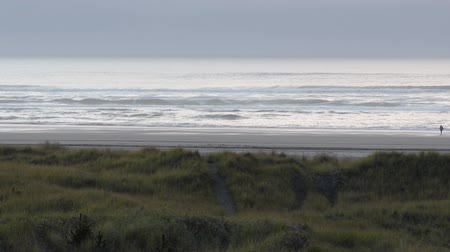 Beach grass, a trail going through it it to the beach and gentle rolling waves in the ocean at sunset in Long Beach, Washington Stok Video