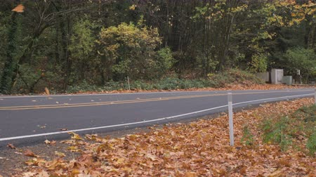 A pickup truck drives by, yellow leaves fall alongside the rural road in autumn.
