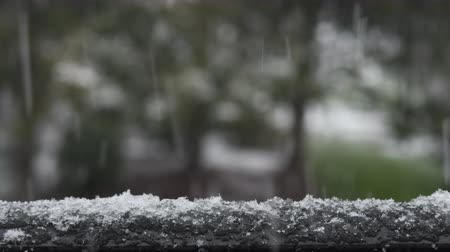 Close up of wet snow falling and accumulating. Trees out of focus in the background. Wideo