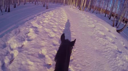 leisureactivity : Riding on horseback in the winter woods . Riding on a horse in winter forest first-person gopro. Horse in winter on fresh snow at sunset. Ridding on horse in winter snow wood gopro sun and sunset Stock Footage
