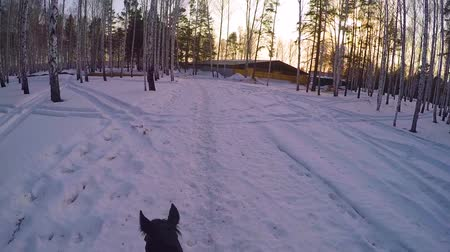 leisureactivity : Riding on horseback in the winter woods . Riding on a horse in winter forest first-person