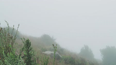 Fog rolling and obscuring view in grassy, hill lands area of nature
