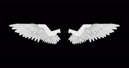 birds flying : White angel wings with an alpha channel