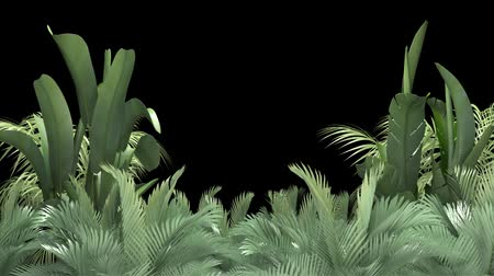 png : Tropical plant on an black background