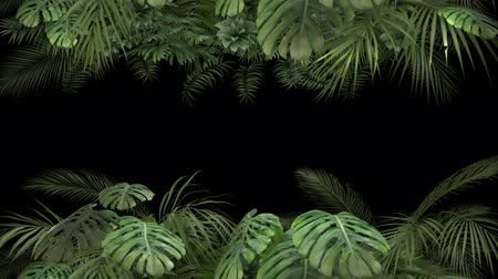 оставлять : Tropical plant on an alpha channel