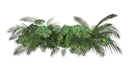 png : Tropical plant on an white background