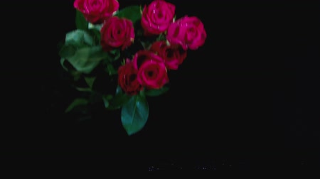 празднование : Falling red rose in slow motion