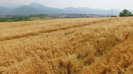 centeio : Aerial view of Wheat field ,Xian,China.