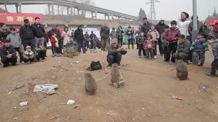 cruelty : Xianyang,China-Feb 26 2012,street performers monkeys. This is a traditional Chinese folk entertainment