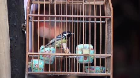 захват : Caged bird flapping around in wooden cage for sale on  Street