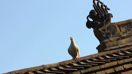 bordas : The pigeons on the roof tile of temple,China Stock Footage