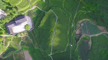 agrarisch : Luchtfoto van theeplantages en dorp, Hubei, China. Stockvideo
