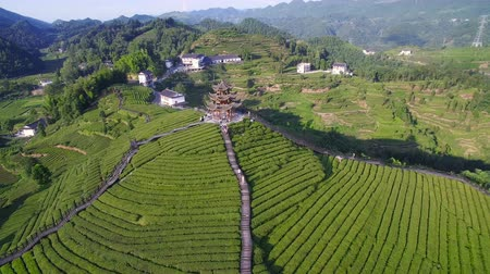 явление : Aerial view of tea plantations,Hubei,China.