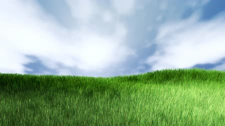 луг : Green grass background. Grass is moving with a wind.