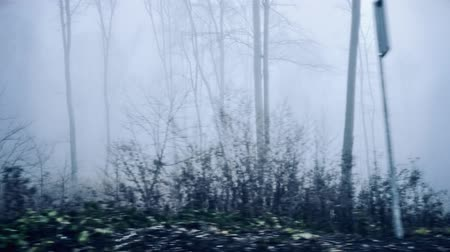 сценарий : Misty woods driving