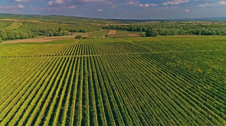 Kutjevo vineyards aerial
