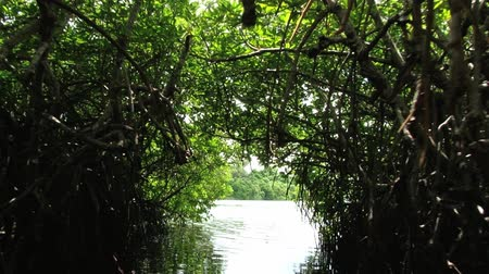mangue : Tourist boat passes by the narrow passage in the mangrove forest at the Madu Ganga river in Sri Lanka.