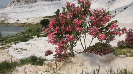 chalky : Pamukkale meaning cotton castle in Turkish is a natural site in Denizli Province in southwestern Turkey. Pamukkale is one of Turkeys top attractions and its precious in the world with its cotton-look terraces. The underground water once gave life to the