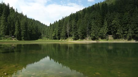 olhando a câmera : Lake Synevyr in Carpathian Mountains of Ukraine