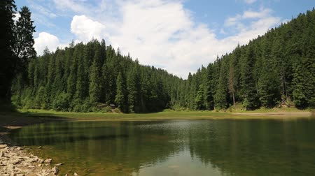 olhando a câmera : Lake Synevir in Carpathian Mountains, Ukraine