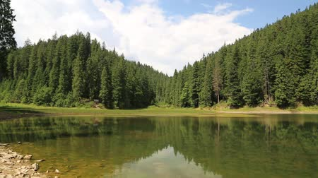 olhando a câmera : Mountain lake in Carpathians, Ukraine