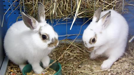 gnawer : Funny rabbits in pet shop