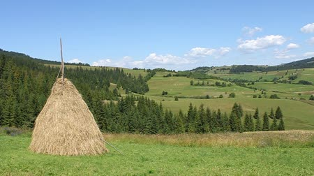 hay cock : Haystack on green field in Carpathian Mountains