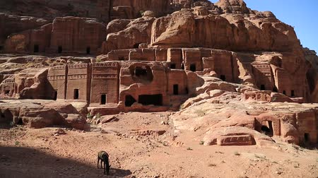 Donkey near rock cut tombs on the Street of Facades in Petra, Jordan. Crenellated rupestrian tombs along the Street of the Facades in the ancient city of Petra - historical and archaeological city in Jordan Стоковые видеозаписи
