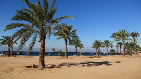 aqaba : Tropical resort in Tala Bay, Hashemite Kingdom of Jordan. Palms on the beautiful beach. Red sea, gulf of Aqaba. View on Israel and Egypt in the distance