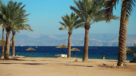 aqaba : Palms on the beautiful beach. Tropical resort in Tala Bay, Hashemite Kingdom of Jordan. Red sea, gulf of Aqaba. View on Israel and Egypt Stock Footage