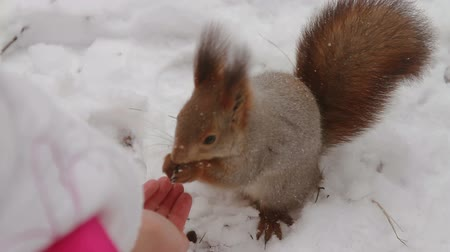 palm squirrel : Squirrel eating pine nuts with human hands