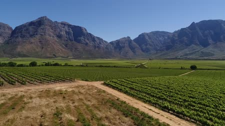 цвет бордо : Scenic aerial views over the vineyards in the Slanghoek valley in the breede valley outside the town of worcester in south africa