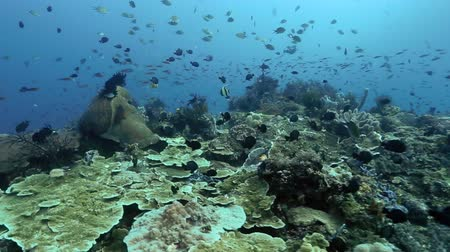 indonesia : indonesia coral reef Stock Footage