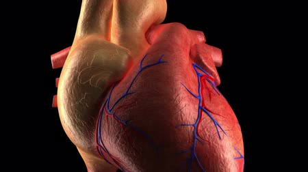choroba : Anatomy Heart - Human Heart Beat - Close-up Wideo