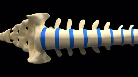 bol : Spine Anatomy - Backbone isolated on Black Wideo