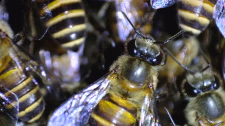 Close-up Video, Bees in the hives. Depth of field Macro scene.