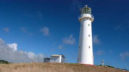 Group of a bird flying around the white lighthouse.  Cape Egmont Lighthouse, New Plymouth, New Zealand. Stock mozgókép