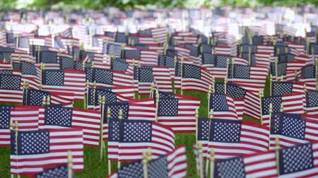 dag van de arbeid : Amerikaanse vlaggen op Memorial Day in het park Stockvideo