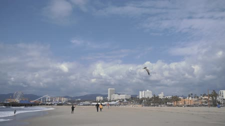los angeles skyline : Flying seagull on the beach in Santa Monica, California