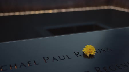 elf : Yellow flower on a black monument with names in New York Stockvideo