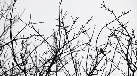 In the winter you find treetops in the forest whit an bird Стоковые видеозаписи