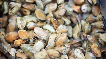 midye : Close-up of frozen mussels in the store. Supermarket Refrigerator Stok Video