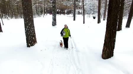 hátsó megvilágítású : Mother and son with a Yorkshire Terrier walking in the winter forest. They run along the path, the drone flies in front of them, aerial shoot through the trees in the forest Stock mozgókép
