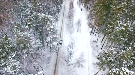 buggy car : Aerial view of the car moving in the winter forest. The drone flies over the trees behind the car