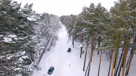 buggy car : Aerial view of the car moving in the winter forest. The drone flies over the trees