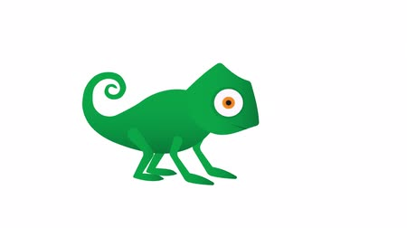 jaszczurka : Chameleon. Lizard hunting, animation with alpha channel enabled