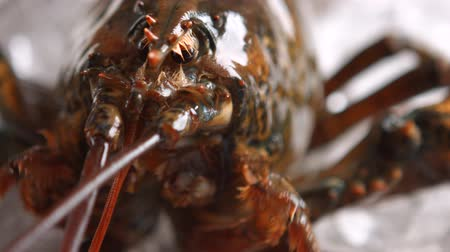 mozog e fel : Lobster moves his mouth. Head of brown lobster. What is this place. Reacting to new environment.