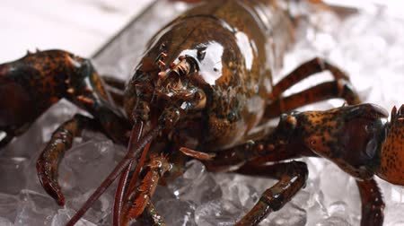 kerevit : Live lobster on ice cubes. Brown lobster moves his mouth. Sea creature with strong shell. Claws and jaws. Stok Video