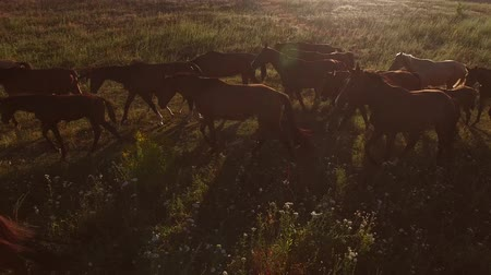 yaşama gücü : Horses walking on meadow. Horse flock is slowly moving. Patience and strength. Goals will be reached.